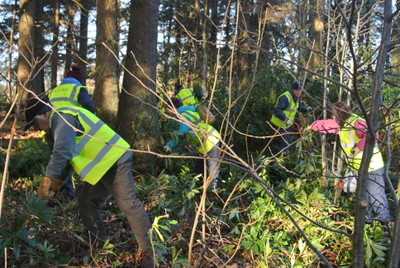 Volunteers clearing rhododendrons